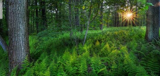 Linn Run State Park, Woods at Sunset by Glen Green — 5792-96wtmk_med